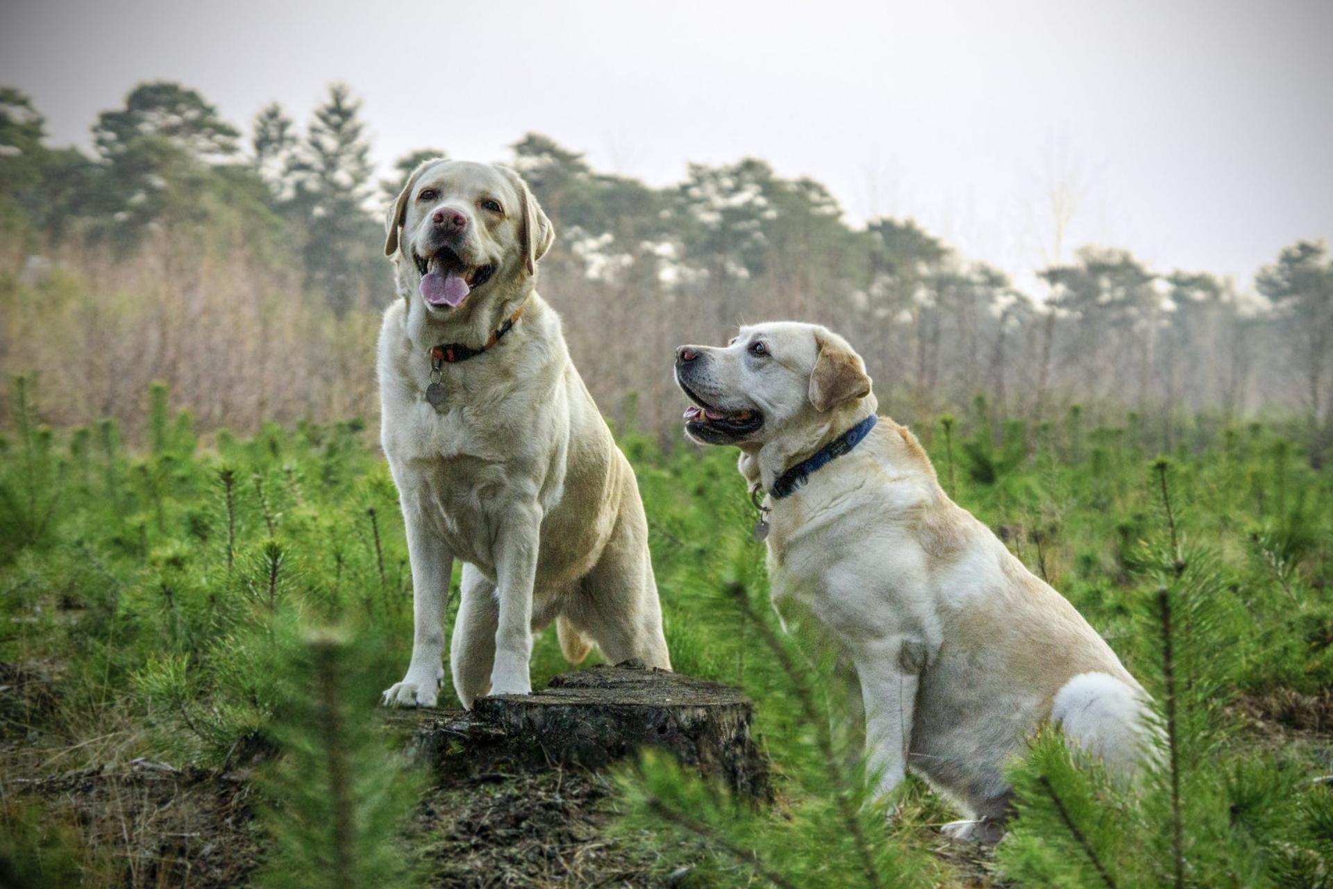 Nos résidents : Luna et Pepper