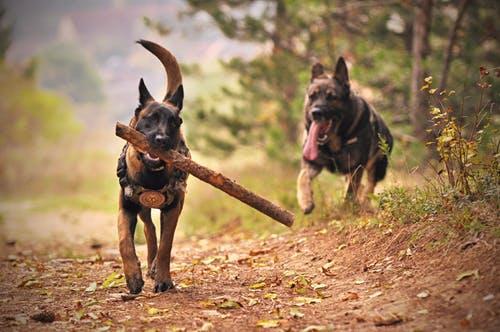 Nos résidents : Maestro et Koba